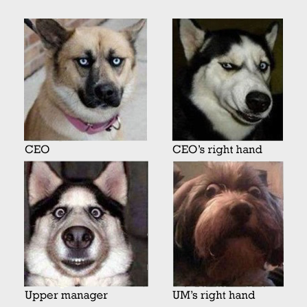 dogs-in-offices1